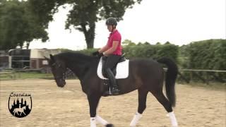 pferd richtig bandagieren