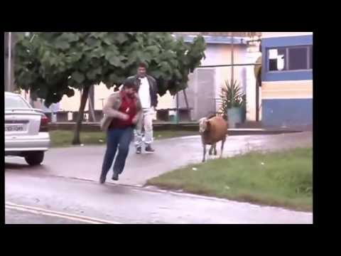 Sheep butting people. It's so funny