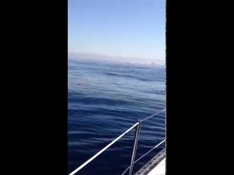 Bob Nickel - A Drop Rejoins the Ocean