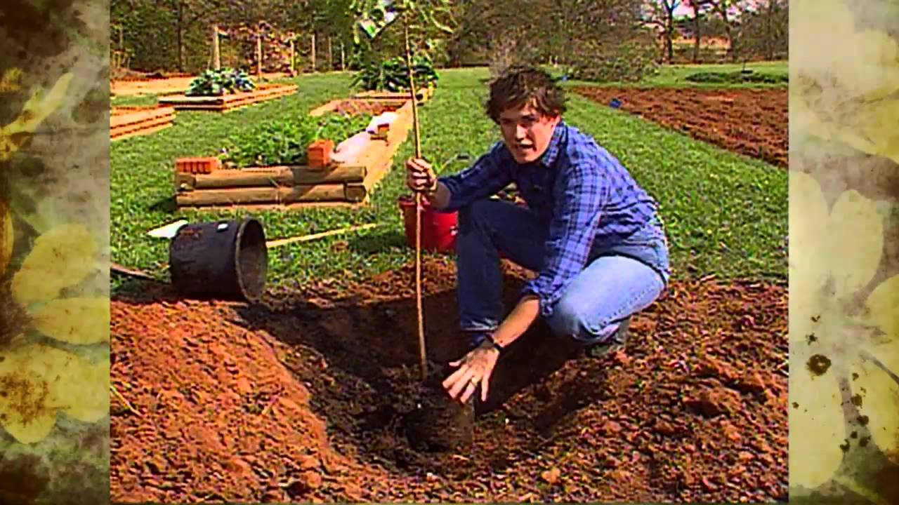 Tree Planting In Heavy Clay Youtube