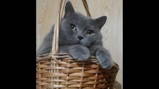 Коты.крутое видео Funny Cats