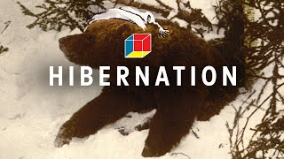 How Animals Hibernate