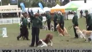 Whitchurch Dog Display Team