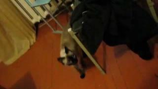 Кошка массажистка