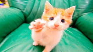 Funny Animals Giving High Fives Compilation 2016
