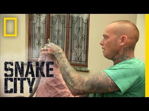 Menacing Mamba | Snake City