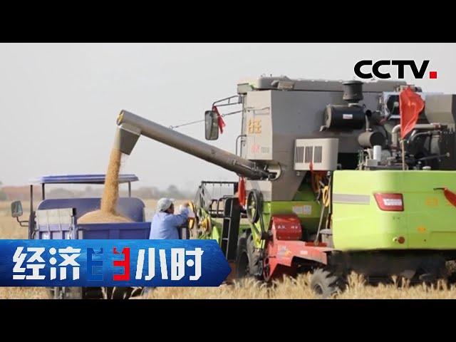 粮食价格上涨、小麦却成为饲料原料 原因何在?「经济半小时」20210723 | CCTV财经