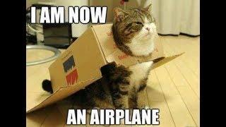 Funny Cat Video Haha Very Funny || Fun Skill ||