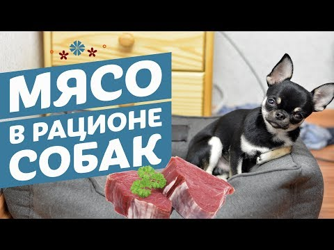 Мифы и правда о свинине в рационе питания котов и собак