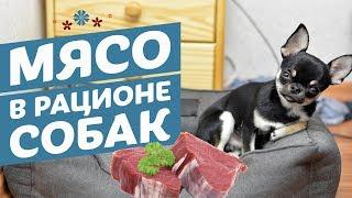 Мясо в рационе собак: какое и в каком виде лучше давать