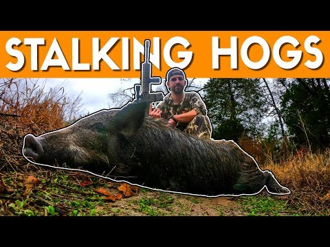 STALKING FERAL HOGS With An AR15 | East Texas Hog Hunting