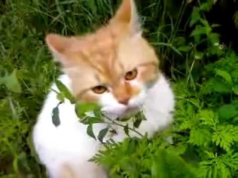 Когда у кошек зов кота