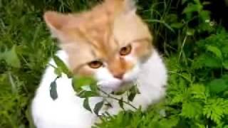 зов кота