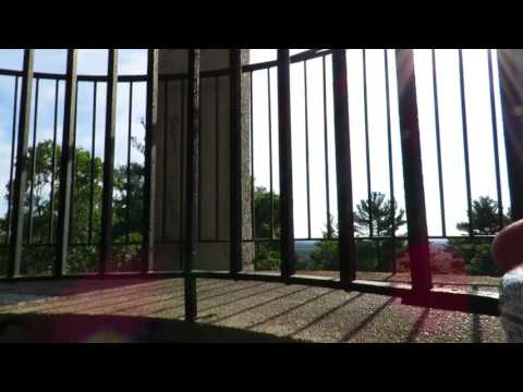 Bear Hill observation tower in Sheepfold Reservation, Stoneham MA