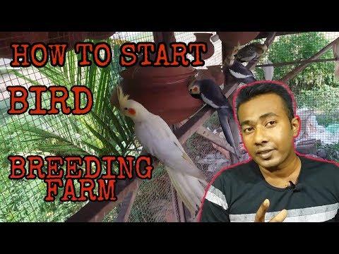 HOW TO START A BIRD BREEDING FARM HD