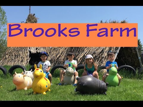Amazing Fun at Brooks Farm | Great Activities, Farm Animals and Fruit Picking