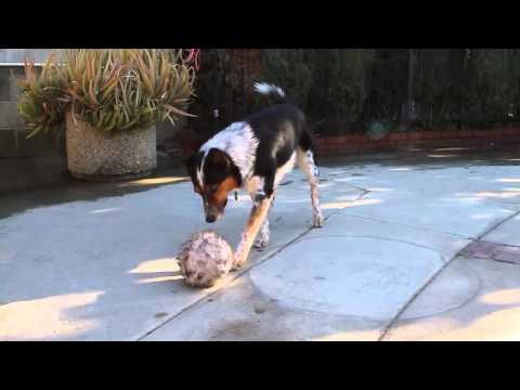 smartest-dog-in-the-world-jumpy-123-trick