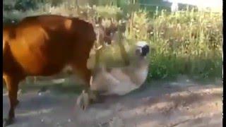 Amuzament Videoclip Funny Razi De Mori Criza De Ras 2016
