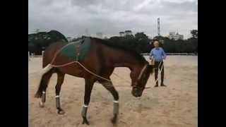 Repeat youtube video Pessoa Training System pour Nelson Pessoa   YouTube