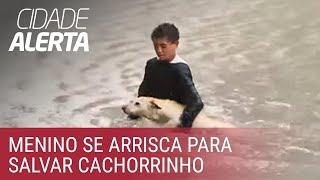 Comovente: criança resgata cachorro em enchente na zona oeste de São Paulo