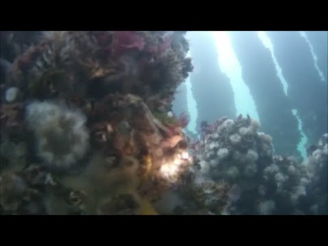 """ GoPro "" Scuba Diving in the Pacific Northwest - (Artificial Reef Dive)"