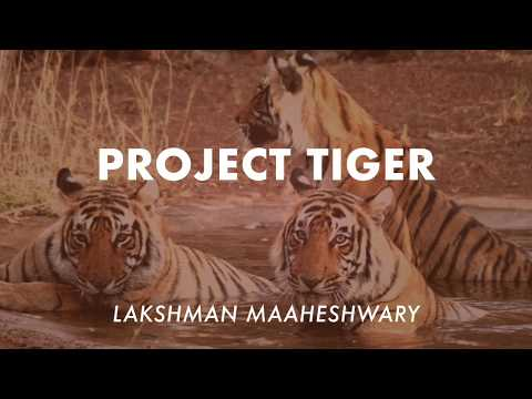 Project Tiger - By Lakshman Maaheshwary