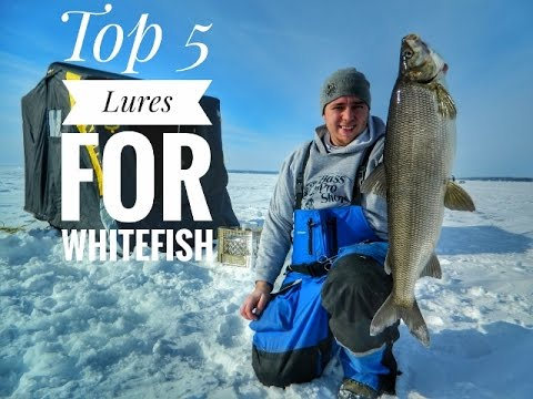 Top 5 Ice Fishing Lures For Catching Lake Simcoe Whitefish