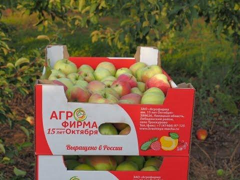 Смотреть Троекуровские садоводы ЗАО «Агрофирма 15 лет Октября» в борьбе за урожай яблок. онлайн