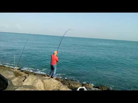Abu dhabi UAE 2016...Queen Fish