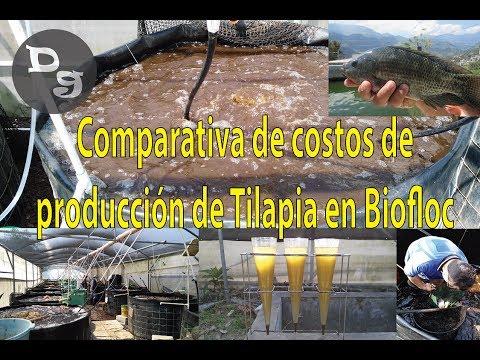 Costos de Producción de Tilapia en Biofloc