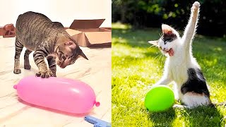 Cat Reaction to Playing Balloon  Funny Cat Toy Reaction Compilation