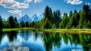 Musique relaxante chant des oiseaux et bruit de la forêt 1 heure offert par Orient