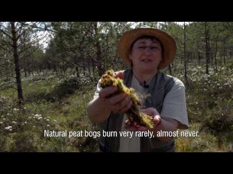 Restoring Peatlands in Russia - for fire prevention and climate change mitigation