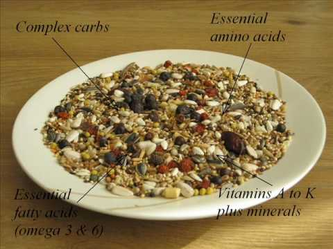 Lovebird and parrot food nutriberries youtube lovebird and parrot food nutriberries forumfinder