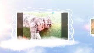ИСТОРИЯ 1                                             дружба кота Дымка