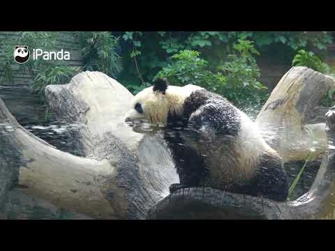 Let Panda Meng Lan Show You How To Have Fun With Water | iPanda