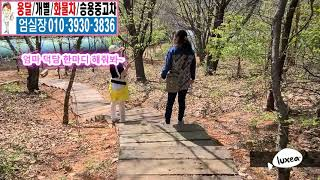 영업용넘버 엄실장 용달개별 전문매매 엄마와 산책길 20…