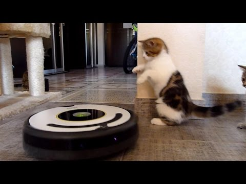 Funny  Kittens Dancing with Robot