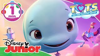 T.O.T.S. | We Can Do Whatever We Wanna Do Music Video 🎶 | Disney Junior UK