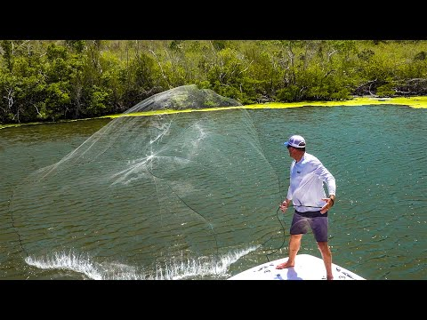Castnetting THOUSANDS Of Fish - Butterflied Yellowtail Snapper! {Catch Clean Cook} US Virgin Islands