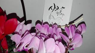 AS-131. [민법 제55조] 꽃 시클라멘. 야간촬영…