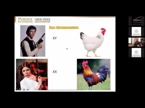 Avian genetics: Introduction to poultry breeding