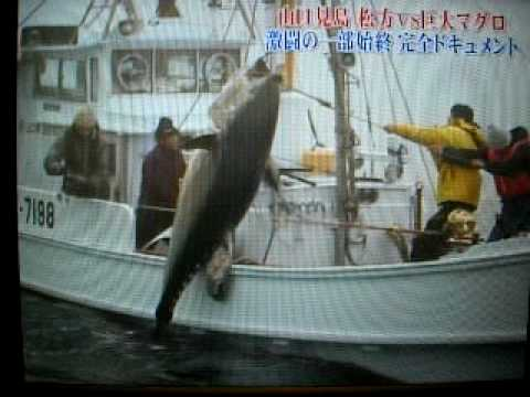 松方弘樹 巨大マグロを釣る。