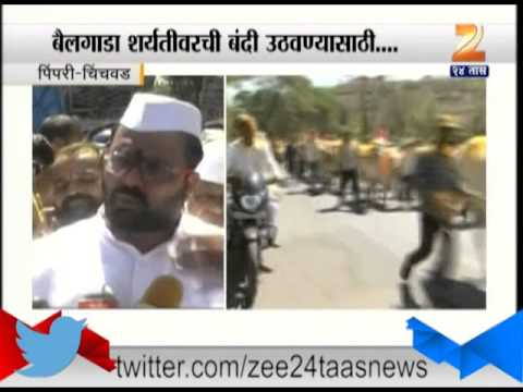 Pimpri Chinchwad : Bull Race Owner On Th Road To Lift The Ban On Bull Race
