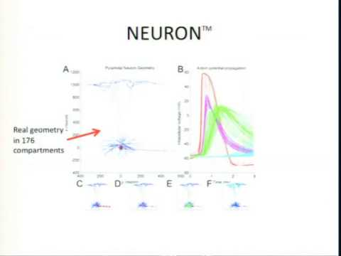 Neuronal Modeling and Synchronicity - Greg Stacey