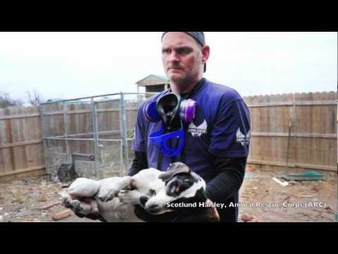 Agape Animal Rescue Onsite At Operation Sweethearts