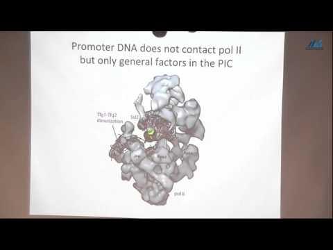Roger Kornberg (Stanford University) The Molecular Basis of Eukaryotic Transcription