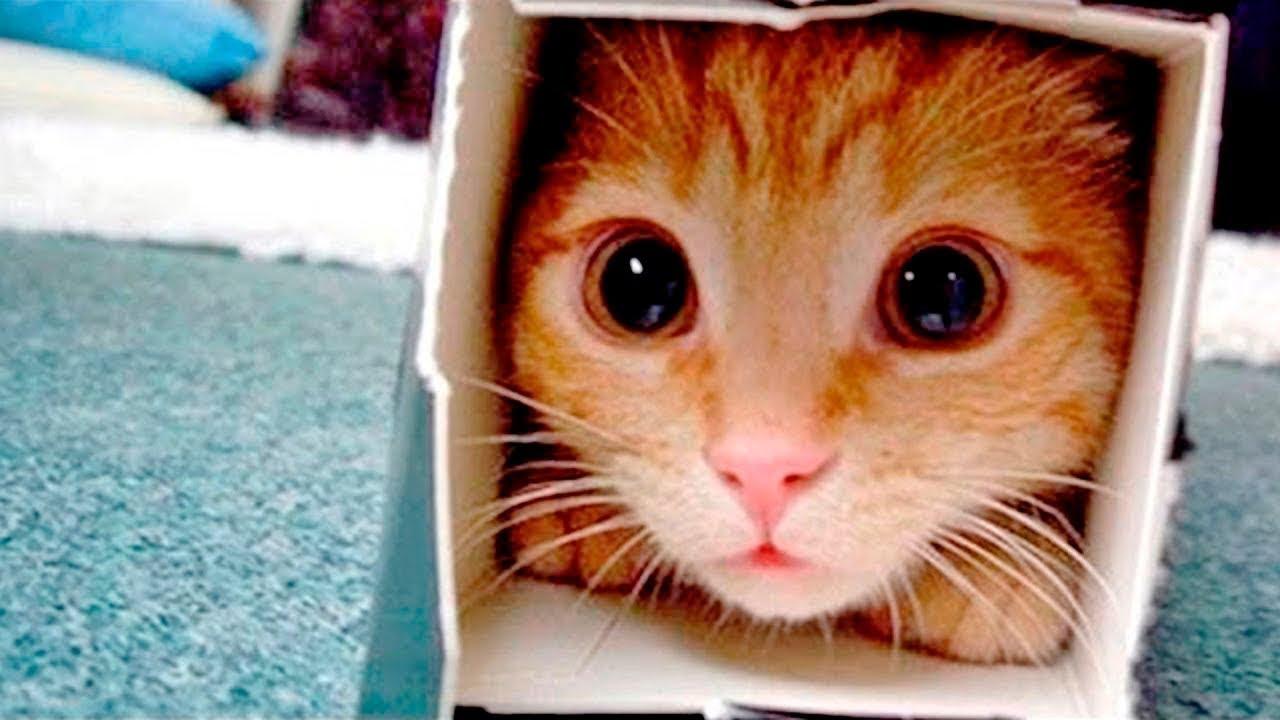Приколы с Котами - Смешные Коты и Кошки 2019! | ПОПРОБУЙ НЕ ЗАСМЕЯТЬСЯ - ТЕСТ НА ПСИХИКУ, Смешные Приколы с Животными, Смешные Коты, Cute Cats 113