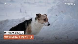 Сибирский Хатико три месяца в поле на морозе ждал своего хозяина