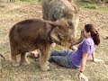 Girls are Feeding Milk to Baby Elephants